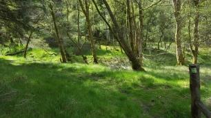 17 old woodland dene